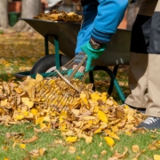 Fall Clean-up Tips