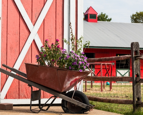 Red shed with wheelbarrow in front